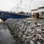 "Deep-sea Trawling Has ""Devastating"" Impact, Study Finds"