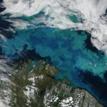 Uncharted Arctic waters: A new opportunity for exploitation, or conservation?