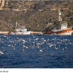 Fishery in the Adriatic: Last Call for Jabuka Pit – Croatia Must Play its Part