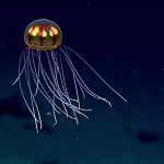 Deep sea life faces dark future due to warming and food shortage