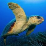 Victory: Mexico Seabed Mining Project Scrapped