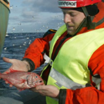 Orange roughy could end up on CITES threatened list