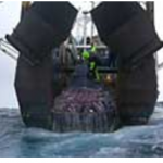 Legal obligation to track bottom trawling now