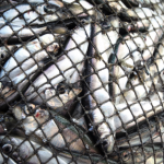 Marine ecosystems and fish stocks at risk as European Parliament adopts disastrous proposal