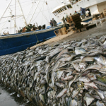 Race to the Bottom: Impact of Deep-Sea Fishing Severely Underestimated