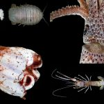 7 Bizarre Deep Sea Creatures Discovered In Indonesian Waters