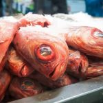 Forest and Bird release letters, slam trawling companies over seabed protection