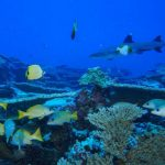 Depleted seamounts near Hawaii recovering after decades of federal protection