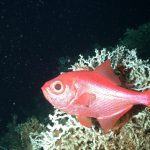 NAFO closes last remaining seamount trawl fishery on the high seas in the Northwest Atlantic; sets some quotas too high to ensure sustainable fisheris and stock recovery