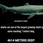 The Deep Sea – An interactive webpage