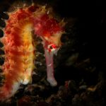 LISTEN: Underwater trailblazer – top seahorse expert talks bottom trawling in NZ