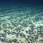 A rush is on to mine the deep seabed, with effects on ocean life that aren't well understood