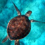 The EU Is Failing to Protect Seas and Biodiversity: Green Groups